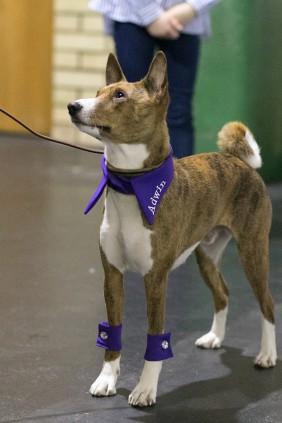 purple personalized dog collar betolli