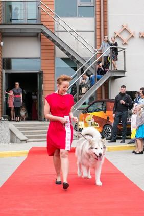 дефиле платьев и собаки