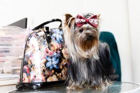Betolli suņu apkakles , foto sesia, personalizētas apkakles suņie, aksesuārs suņiem