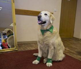 Suņu apakles, suņu aproces, suņu aksesuāri